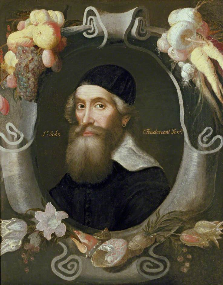 John Tradescant the Elder, attributed to Thomas de Critz (1607 - 1653) © Ashmolean Museum, University of Oxford