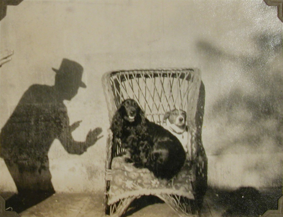 A black spaniel and a terrier, sitting together on a cushion in a wicker chair, the shadow of a man in hat persuading them to stay there. National Trust, Lanhydrock, Cornwall © National Trust / Sue Clark & Robert Adams